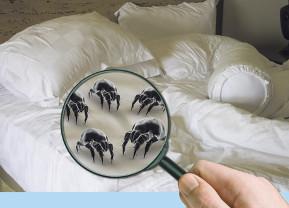 Milben Kleine Monster Im Bett Gesundes Haus